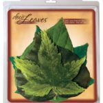 Spring Cheese Leaves