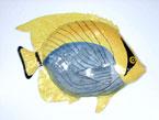 17″ x 13″ Bandit Fish